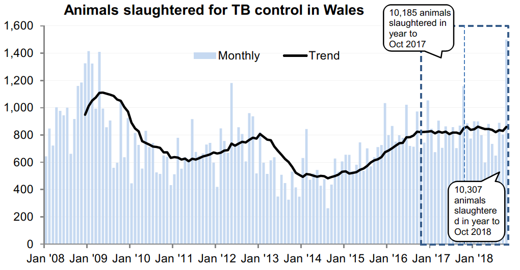 Chart showing the trend in animals slaughtered for TB control in Wales since 2008. 10,307 animals were slaughtered in the 12 months to October 2018, an increase of 1% compared with the previous 12 months.