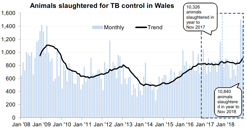 Chart showing the trend in animals slaughtered for TB control in Wales since 2008. 10,840 animals were slaughtered in the 12 months to November 2018, an increase of 5% compared with the previous 12 months.