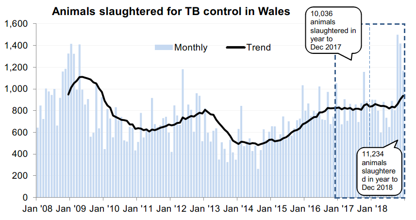Chart showing the trend in animals slaughtered for TB control in Wales since 2008. 11,234 animals were slaughtered in the 12 months to December 2018, an increase of 12% compared with the previous 12 months.