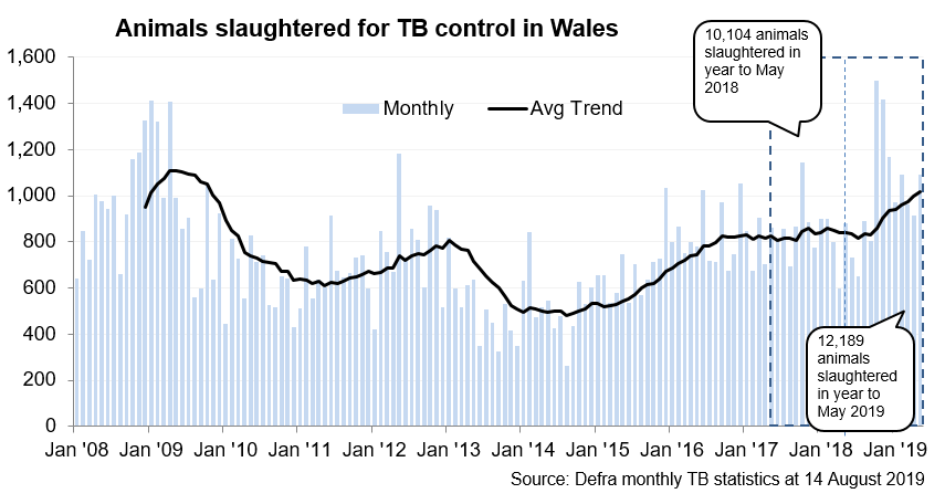 Chart showing the trend in animals slaughtered for TB control in Wales since 2008. 12,189 animals were slaughtered in the 12 months to May 2019, an increase of 21% compared with the previous 12 months.