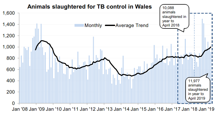 Chart showing the trend in animals slaughtered for TB control in Wales since 2008. 11,977 animals were slaughtered in the 12 months to April 2019, an increase of 19% compared with the previous 12 months.