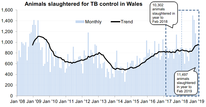 Chart showing the trend in animals slaughtered for TB control in Wales since 2008. 11,497 animals were slaughtered in the 12 months to February 2019, an increase of 12% compared with the previous 12 months.