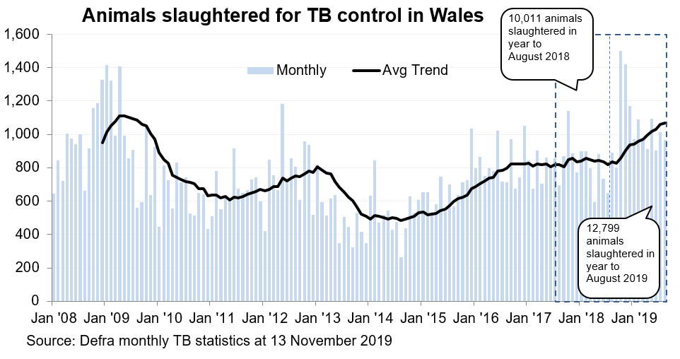 Chart showing the trend in animals slaughtered for TB control in Wales since 2008. 12,799 animals were slaughtered in the 12 months to August 2019, an increase of 28% compared with the previous 12 months.