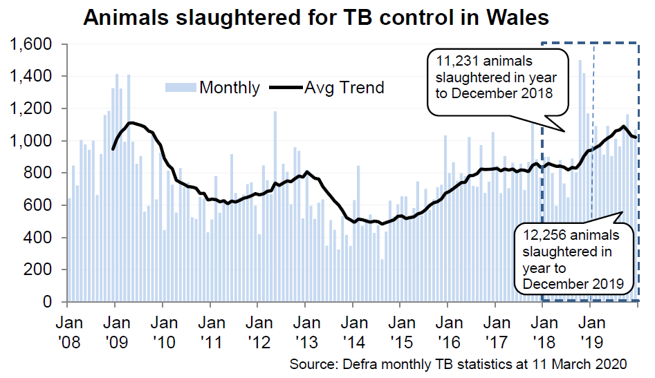Chart showing the trend in animals slaughtered for TB control in Wales since 2008. 12,256 animals were slaughtered in the 12 months to December 2019, an increase of 9% compared with the previous 12 months.