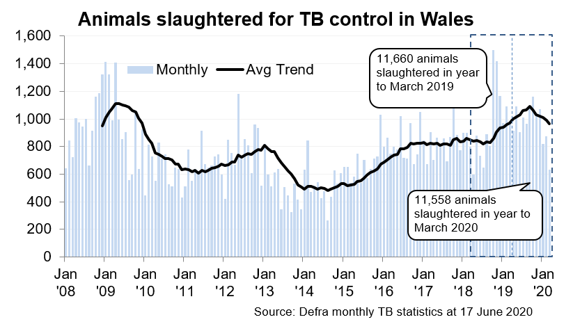 Chart showing the trend in animals slaughtered for TB control in Wales since 2008. 11,558 animals were slaughtered in the 12 months to March 2020, an decrease of 1% compared with the previous 12 months.