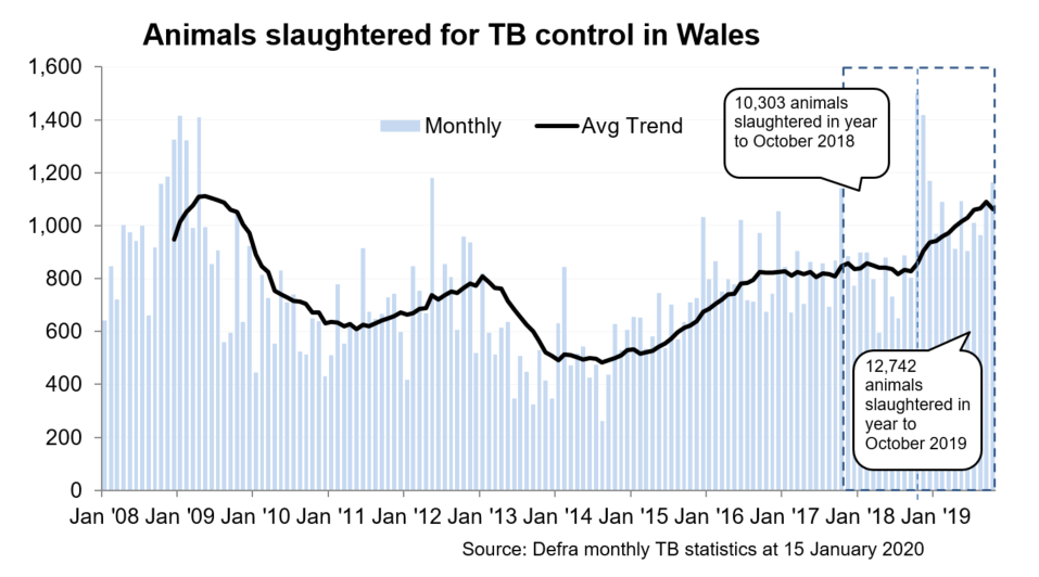Chart showing the trend in animals slaughtered for TB control in Wales since 2008. 12,742 animals were slaughtered in the 12 months to October 2019, an increase of 24% compared with the previous 12 months.