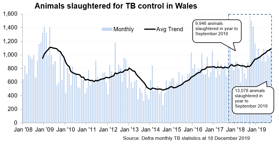 Chart showing the trend in animals slaughtered for TB control in Wales since 2008. 13,078 animals were slaughtered in the 12 months to September 2019, an increase of 31% compared with the previous 12 months.