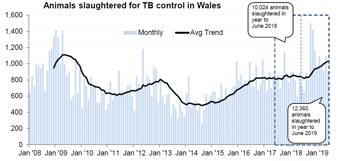 Chart showing the trend in animals slaughtered for TB control in Wales since 2008. 12,360 animals were slaughtered in the 12 months to June 2019, an increase of 23% compared with the previous 12 months.
