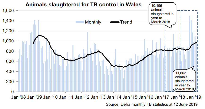 Chart showing the trend in animals slaughtered for TB control in Wales since 2008. 11,622 animals were slaughtered in the 12 months to March 2019, an increase of 14% compared with the previous 12 months.