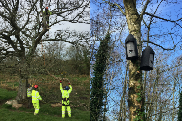 Contractors mounted bat boxes on trees to help protect the bats' natural habitat.