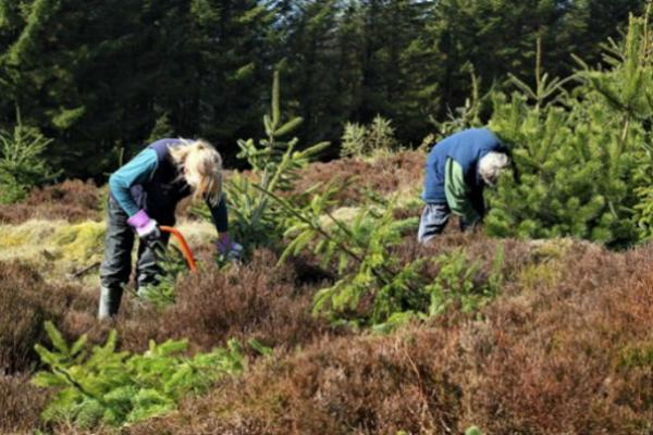 Volunteers with Radnorshire Wildlife Trust